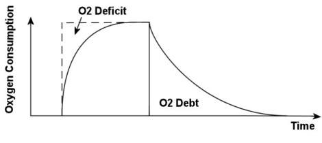 oxygen_debt